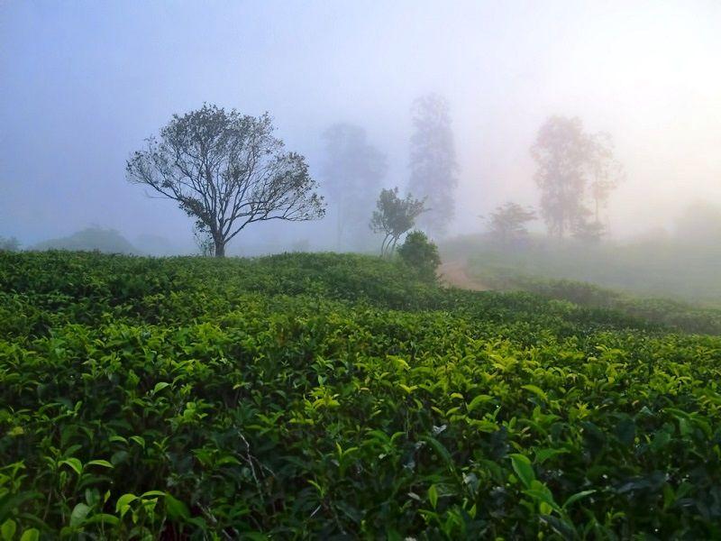 Sinharaja Rainforest